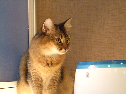 cat_02a.jpg
