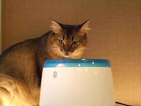 cat_02b.jpg