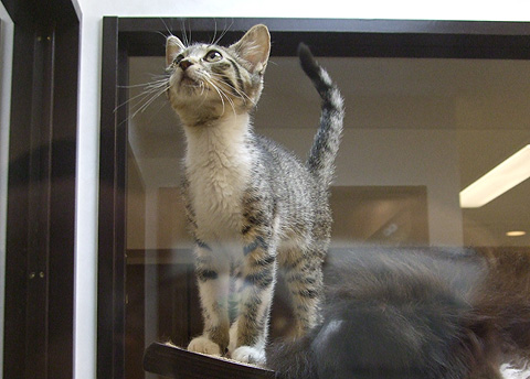 cat_04.jpg